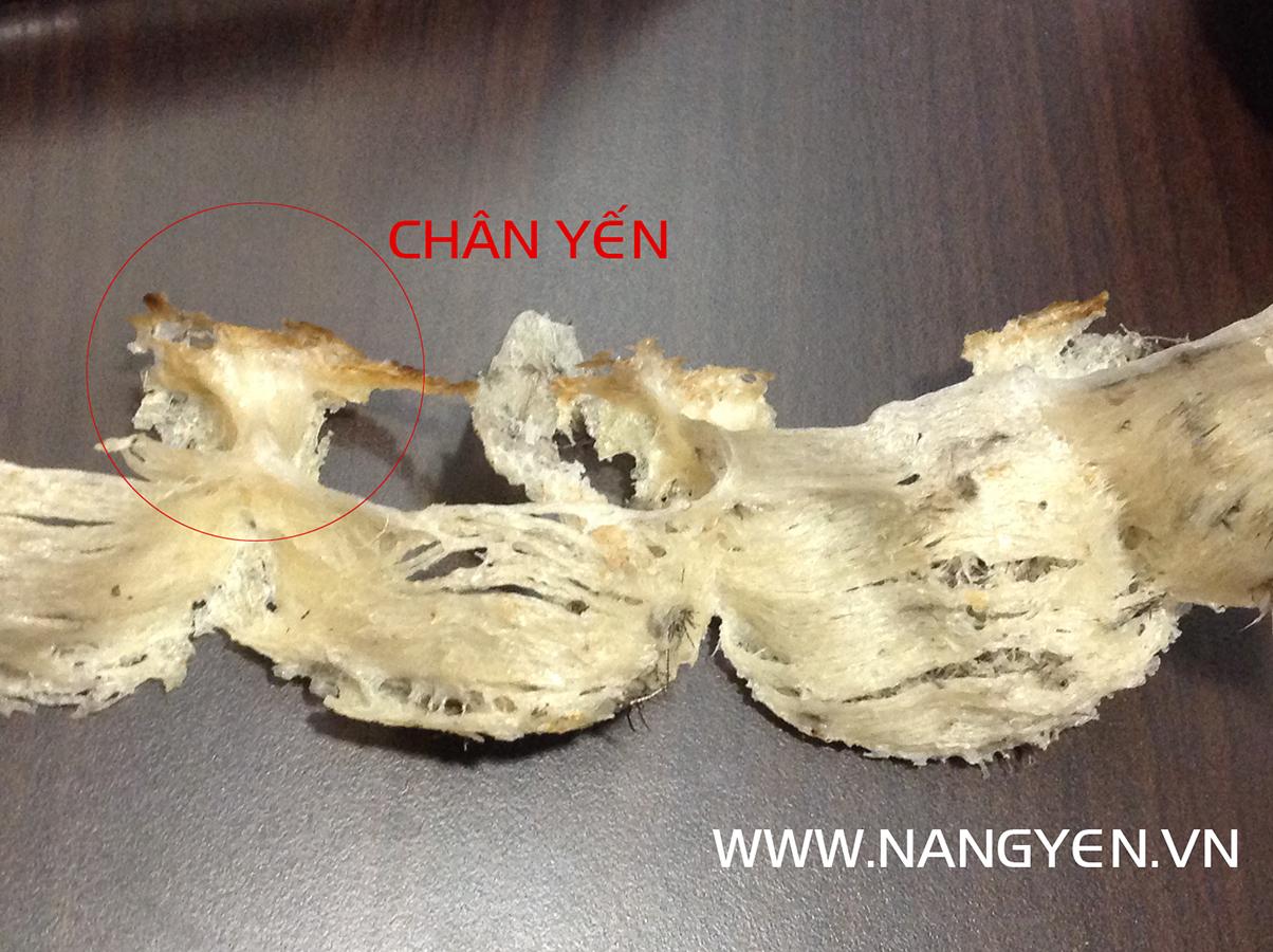 Chân yến là phần cứng nhất trong tổ yến vì nó là phần móng nâng cấu trúc tổ yến